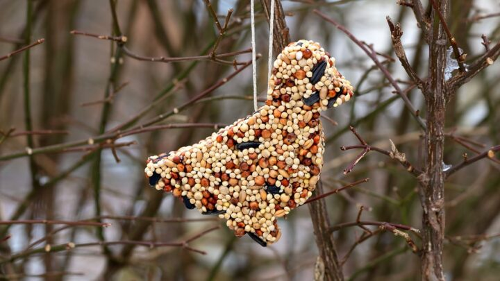 12 Easy DIY Bird Feeders to Make Today 5 Birdseed Feeders The Old Summers Home Creating a space that's inviting to birds isn't hard to do. Simply provide food and the birds will come. Make one of these 12 easy DIY bird feeders today!