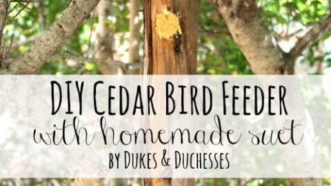 12 Easy DIY Bird Feeders to Make Today 12 DIY cedar bird feeder with homemade suet The Old Summers Home Creating a space that's inviting to birds isn't hard to do. Simply provide food and the birds will come. Make one of these 12 easy DIY bird feeders today!