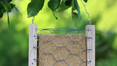12 Easy DIY Bird Feeders to Make Today 8 DIY suet bird feeder The Old Summers Home Creating a space that's inviting to birds isn't hard to do. Simply provide food and the birds will come. Make one of these 12 easy DIY bird feeders today!
