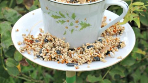 12 Easy DIY Bird Feeders to Make Today 6 teacup bird feeders 6.jpgfit6002c900ssl1 The Old Summers Home Creating a space that's inviting to birds isn't hard to do. Simply provide food and the birds will come. Make one of these 12 easy DIY bird feeders today!